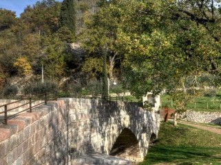 Bosco di San Francesco – Assisi (PG)