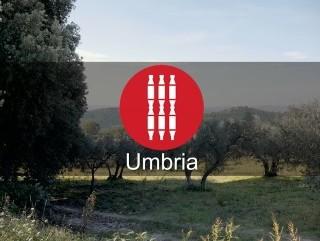 Il paesaggio olivato, visioni dal cielo – le 5 sottozone della Dop Umbria Extravergine d'Oliva