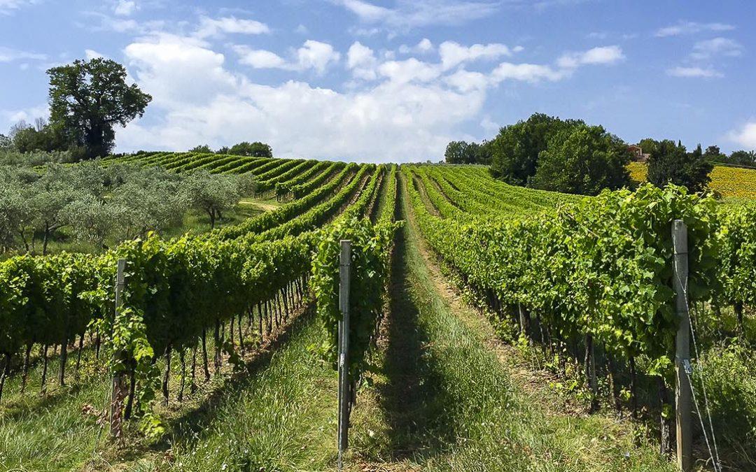Droinwork con Agricolus® su Quadricottero News spiegano l'uso dei droni in agricoltura